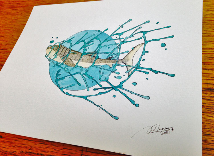 whaleshark water color by jord jansen